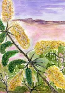 Honey Mesquite Tree in the Davis Mountains